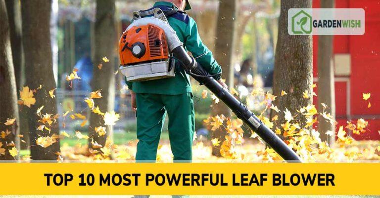 Most Powerful Leaf Blower