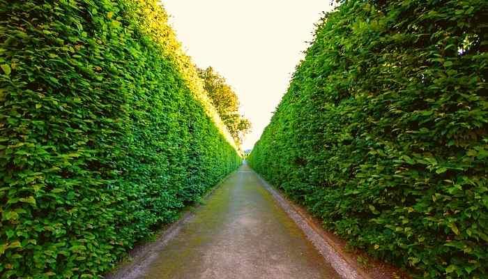 Straight edge hedges