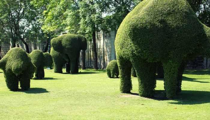 fancy shape hedge