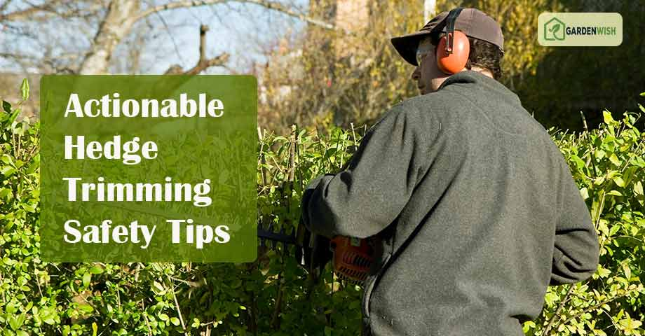 Hedge Trimming Safety Tips
