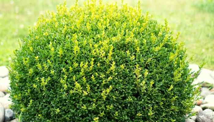 round hedges