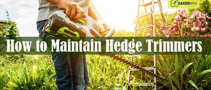 How to Maintain Hedge Trimmers